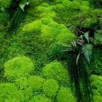 moss wall art ZNE